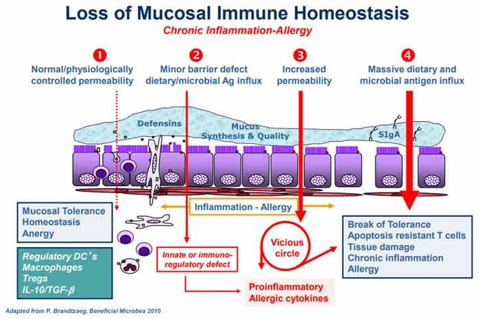 loss of mucosal immune homeostasis